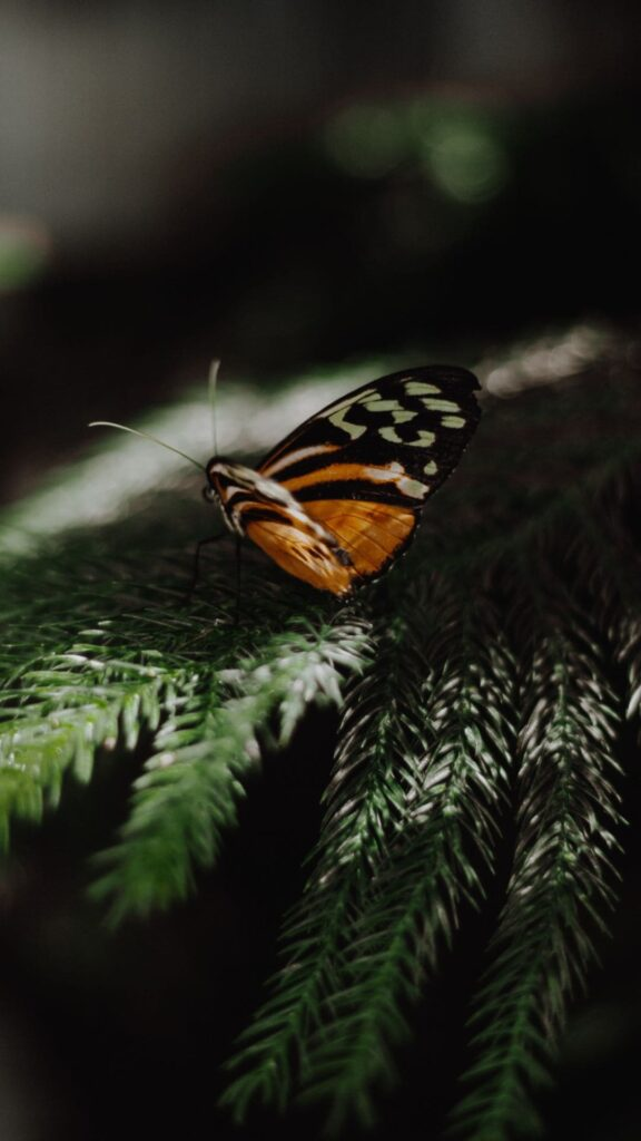 Butterfly Android Wallpaper 6