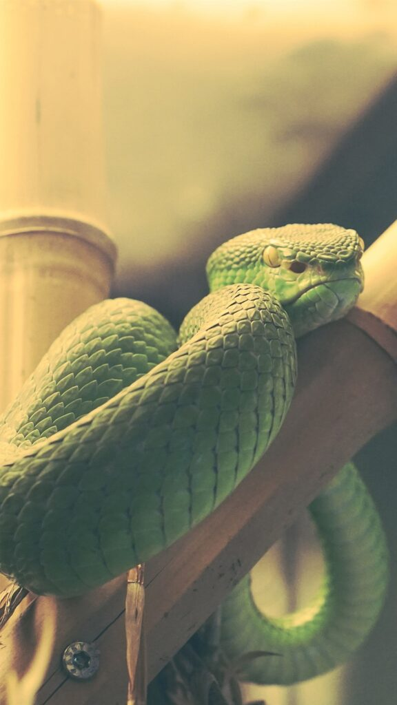 Snake Android Wallpapers 2
