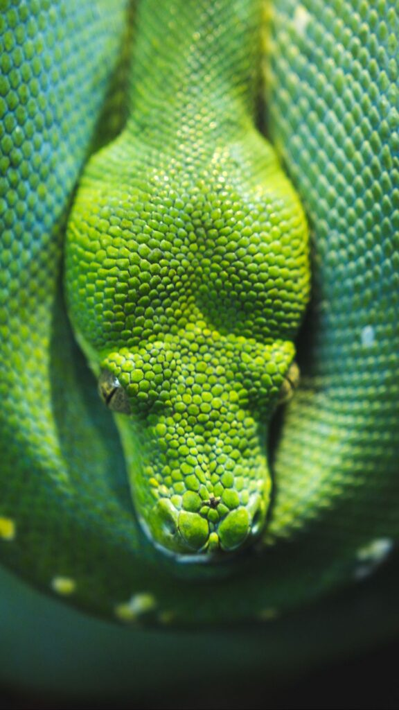Snake Android Wallpapers 7