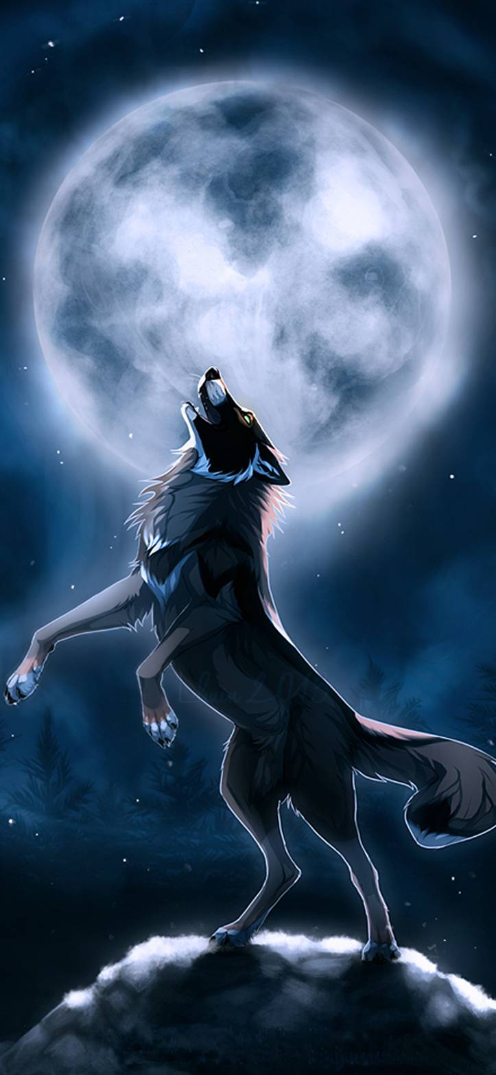 Wolf Pic