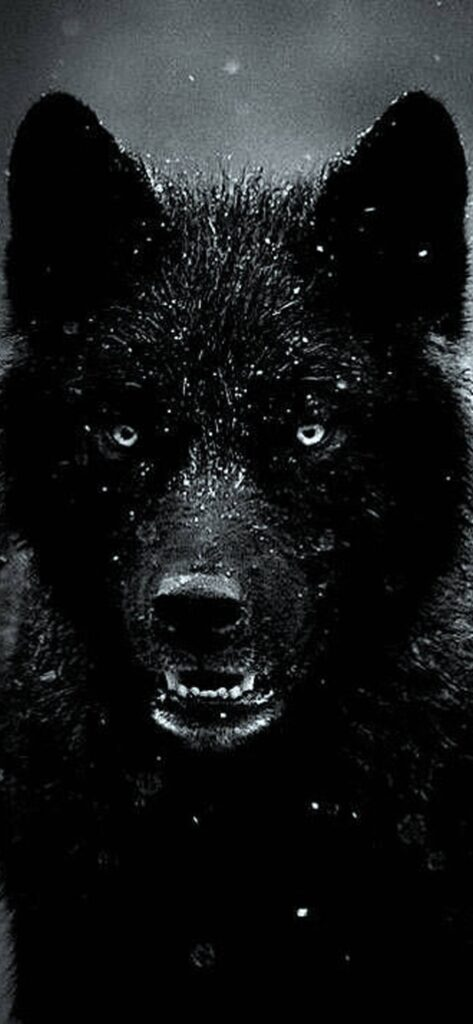 Wolf Wallpaper For iPhone 2